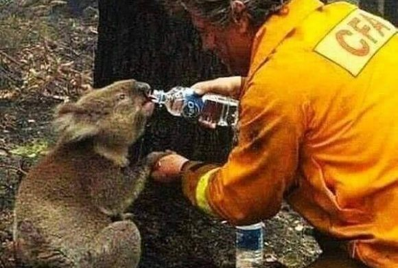 In Australia, the fire and the animals in large scale events beyond what today is shocking